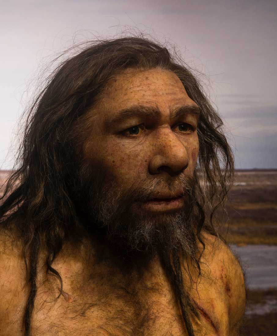 Photograph of a model depicting how Barbu the Neanderthal may have looked